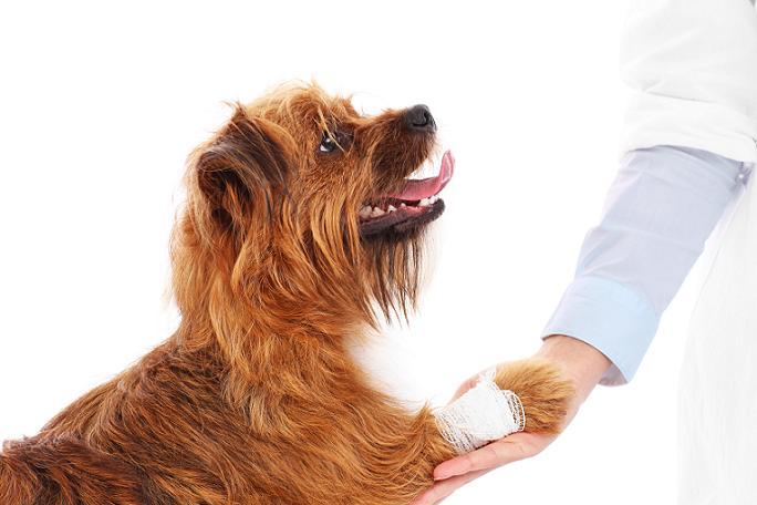 Artrose Canina – Trate aqui!