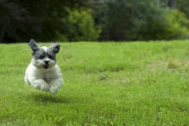 Exercícios para Cachorros – dicas valiosas
