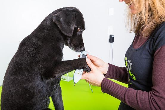 Fisioterapia para Cachorro – Dicas caseiras