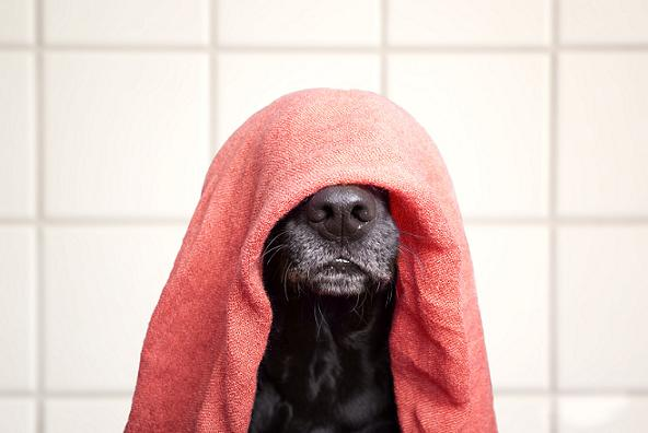 Hidroterapia para Cães – Fortalecer e Recuperar