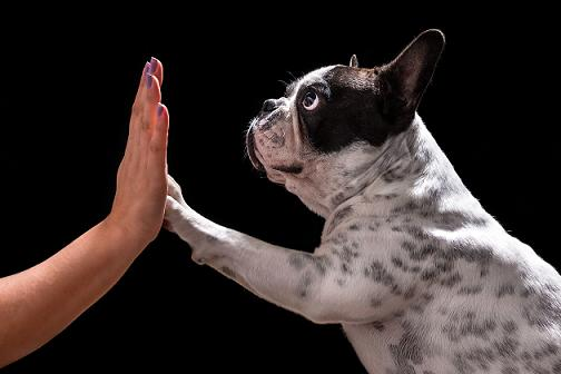 Ortopedista de Cachorros – Como pode ajudar?
