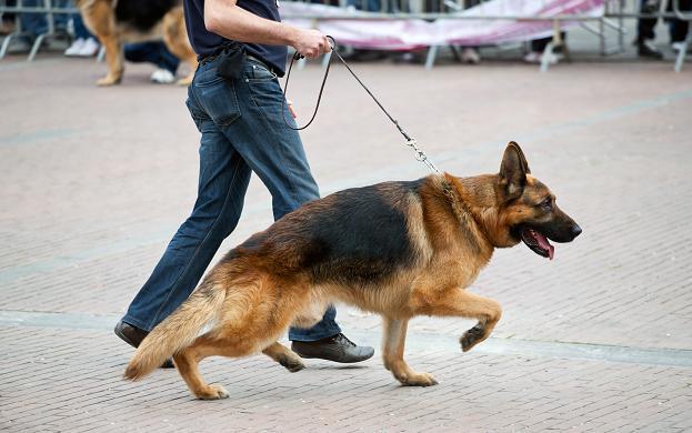 Displasia de Quadril Canina – Dicas de Prevenção