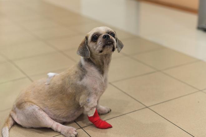 Hérnia de Disco em Cachorros – Recuperando a saúde