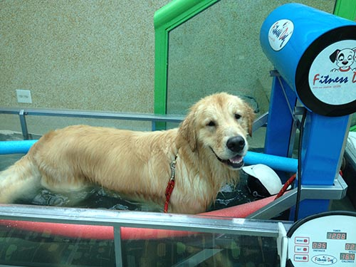 Clínica de Fisioterapia Animal com Hidroterapia – Competência!