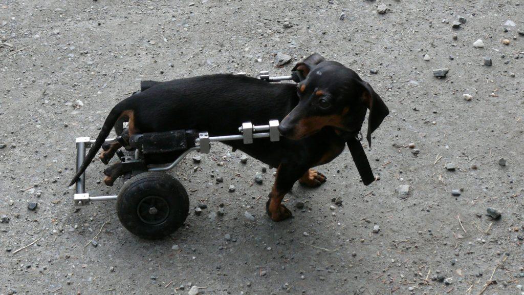 Cadeira de Rodas para Cachorro – Vida saudável
