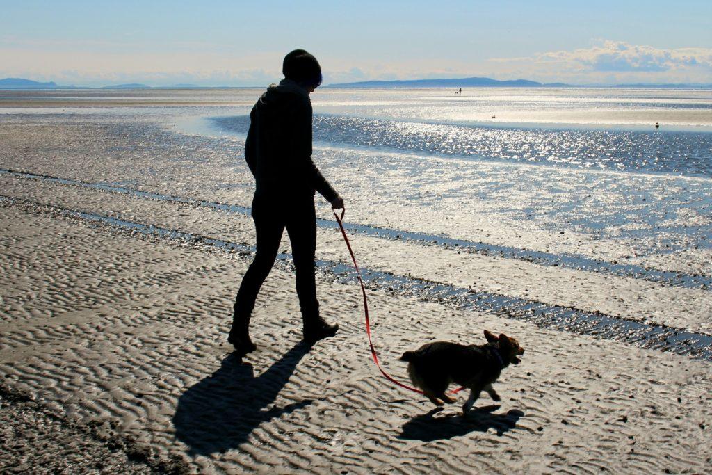 Regime para Emagrecer Cães – Vamos mudar?
