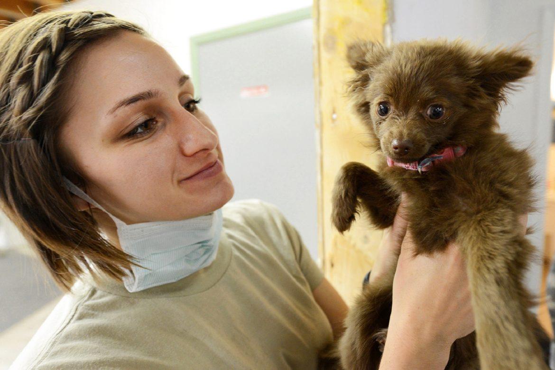 Tomografia Computadorizada em Cães – Auxiliar poderoso