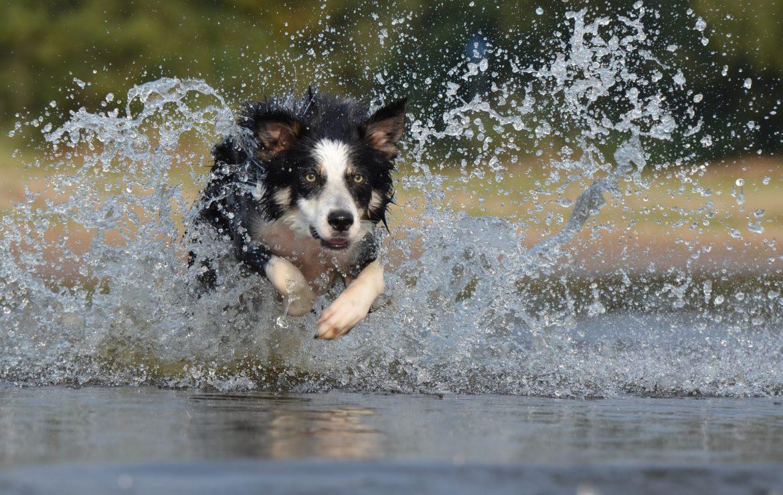 Agility para Cães – Preparando Atletas