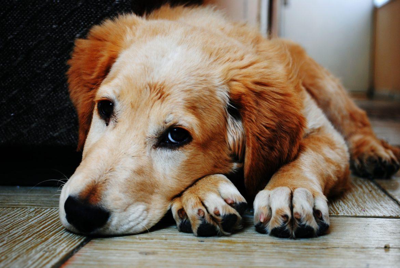 Mielografia para Cães e Gatos – Conheça Mais!