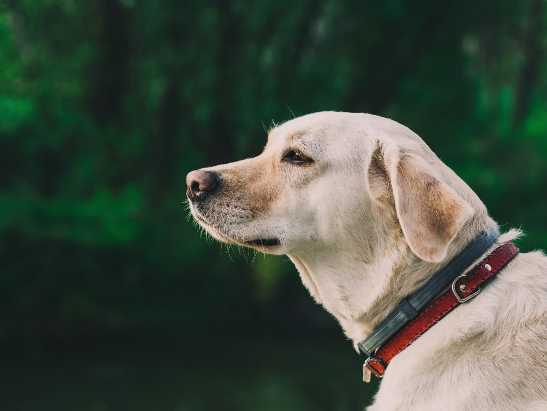 Artrite e Artrose Animal – Conheça Mais