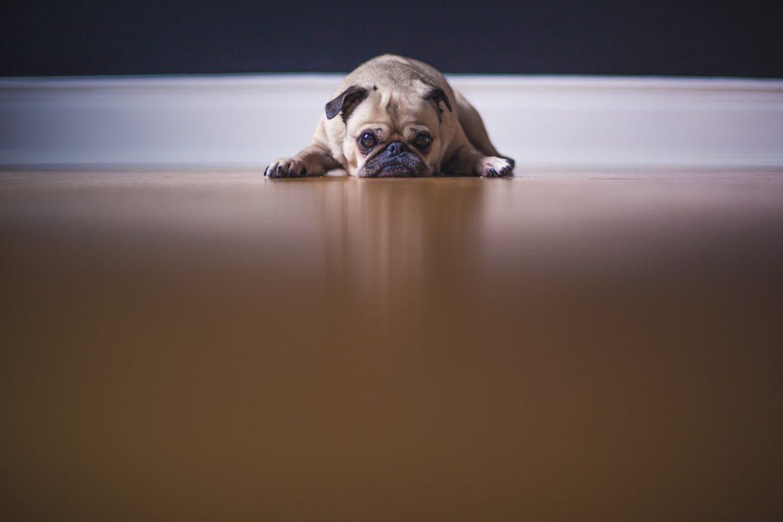 Radiografia em Cães e Gatos – União Perfeita!