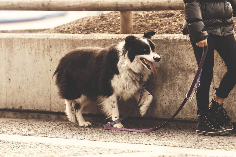 AVC em Cães – Entenda sua importância!