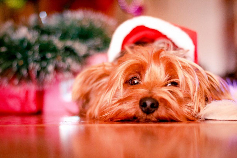Comida de Natal para os Pets – O que pode?