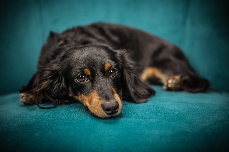 Cachorro Não Consegue Andar – Por quê?