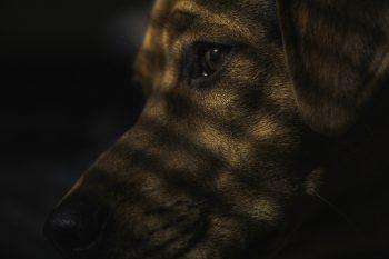 Cachorro com Paralisia no Corpo – Compreenda