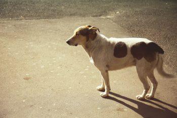 O que é Displasia Canina? Compreenda e saiba como Tratar