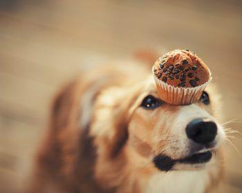 Como Emagrecer um Cachorro – Dicas Saudáveis e Seguras