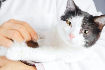 Ortopedia para Gatos – Tratamentos Eficazes para os Felinos