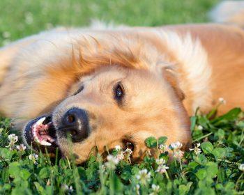 Acupuntura em Cães – Por que Investir nesse Tratamento?