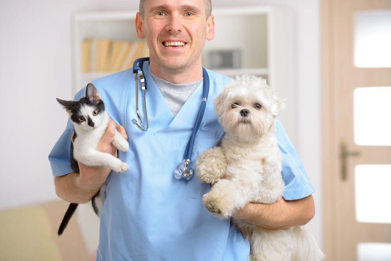 Atue na especialidade veterinária que mais cresce na atualidade!