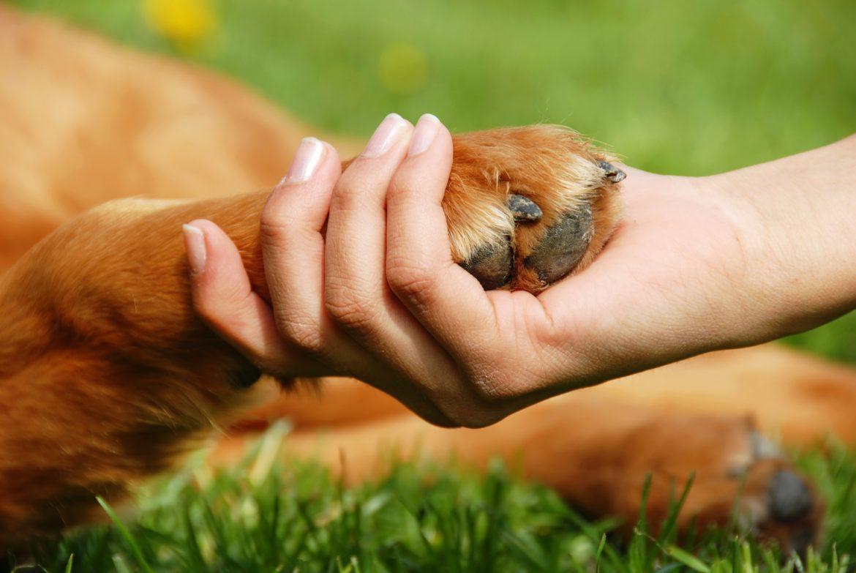 Displasia Canina – Tratamento mais eficaz!