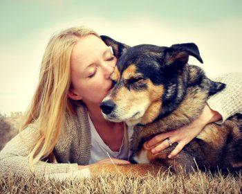 Reabilitação Veterinária – Entenda O Que Podemos Fazer