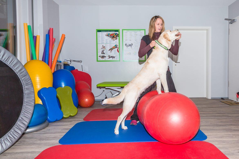 Seja um Licenciado Pet Fisio – Excelência em Fisioterapia Veterinária