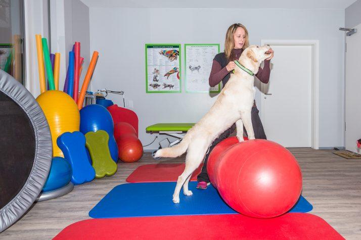 Nova PET FISIO Juiz de Fora – Difundindo a Fisioterapia