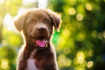 Nomes para Cachorro – De A a Z