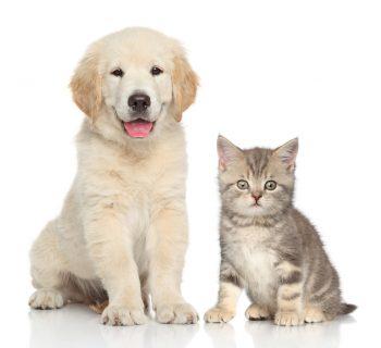 Nomes para Cachorro – Opções de A a Z para Machos e Fêmeas