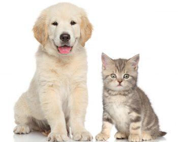 Nomes para Cachorros – Opções de A a Z para Machos e Fêmeas