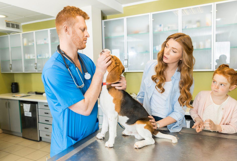 Cachorro com Convulsão – Causas e Primeiros Socorros