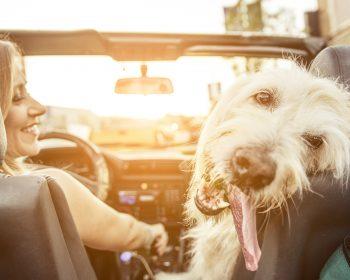 Como viajar com seu cão? Dicas de Transporte