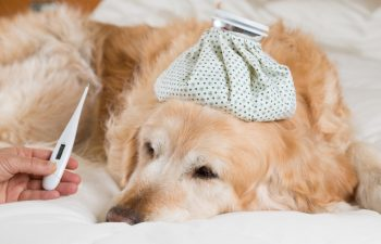 Cuidados de Inverno com os Cães – Evitando o Frio