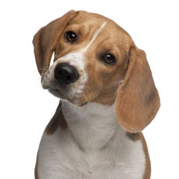 Epilepsia Canina – Como Lidar com Sabedoria?