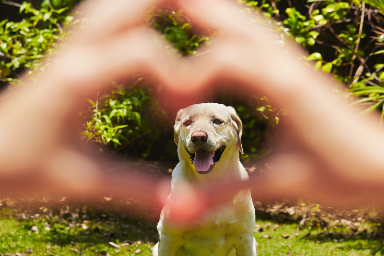 Coração de Cachorro – Como Cuidar