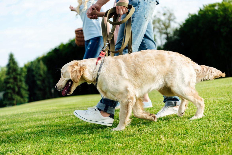 Síndrome da Cauda Equina em Cães – Compreenda