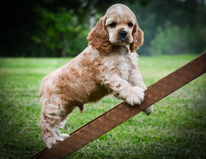 Escada para Cachorro – Evitando Problemas