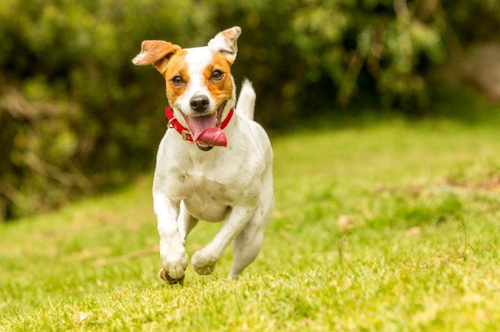 Fisioterapia para Cachorro Voltar a Andar – Funciona!