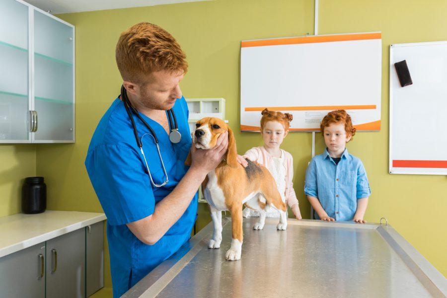 Filhotes de Cães – Cuidados Iniciais