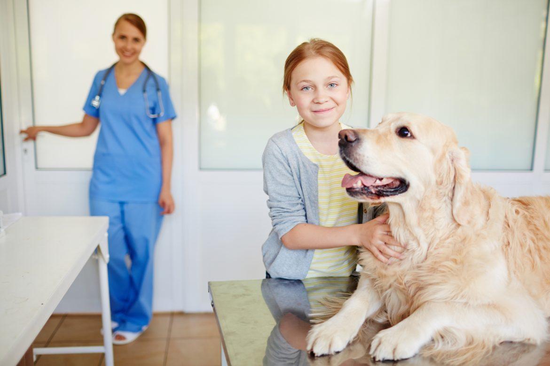 Hipoadrenocorticismo em Cães – Difícil Diagnóstico