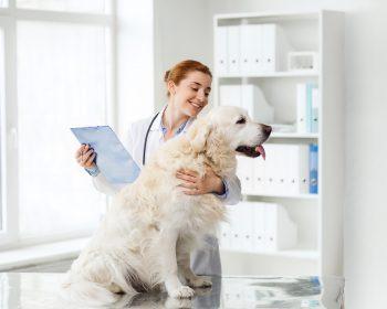 Hipotireoidismo em Cães – Entenda por Completo