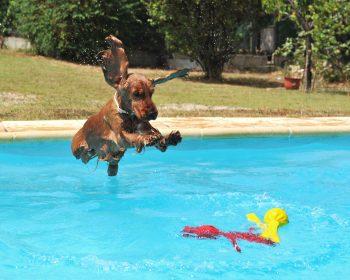 Natação ou Esteira Aquática para cães – Qual o melhor tratamento?