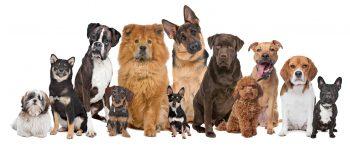 Raças de Cachorro – Como Escolher Corretamente?