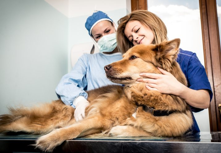 Sopro Cardíaco em Cães – Identificando o Problema