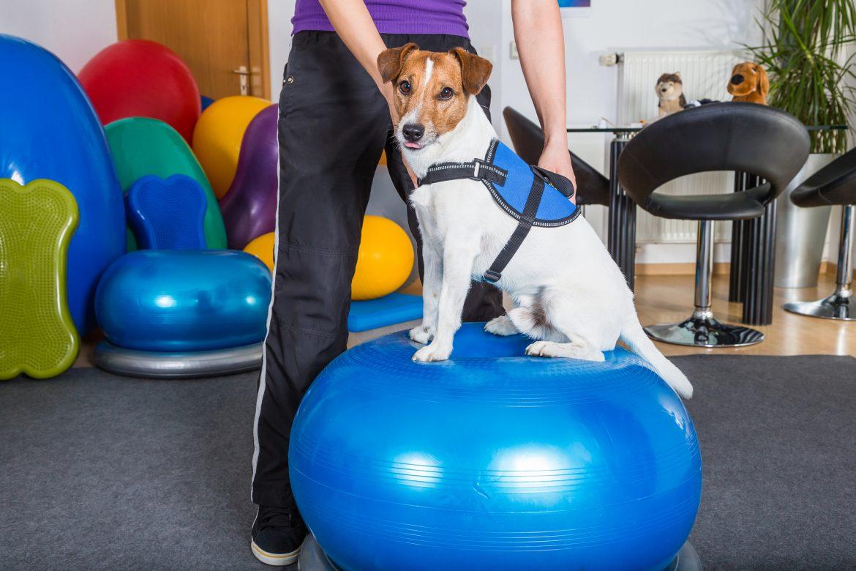 Unidade PET FISIO Indaiatuba – Qualidade em Fisioterapia e Acupuntura Veterinária