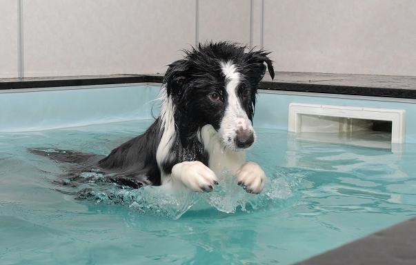 Como Fazer Fisioterapia em Cachorro – Ajudando na Recuperação