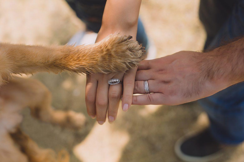 Cachorro – Quando é Necessária sua Reabilitação?