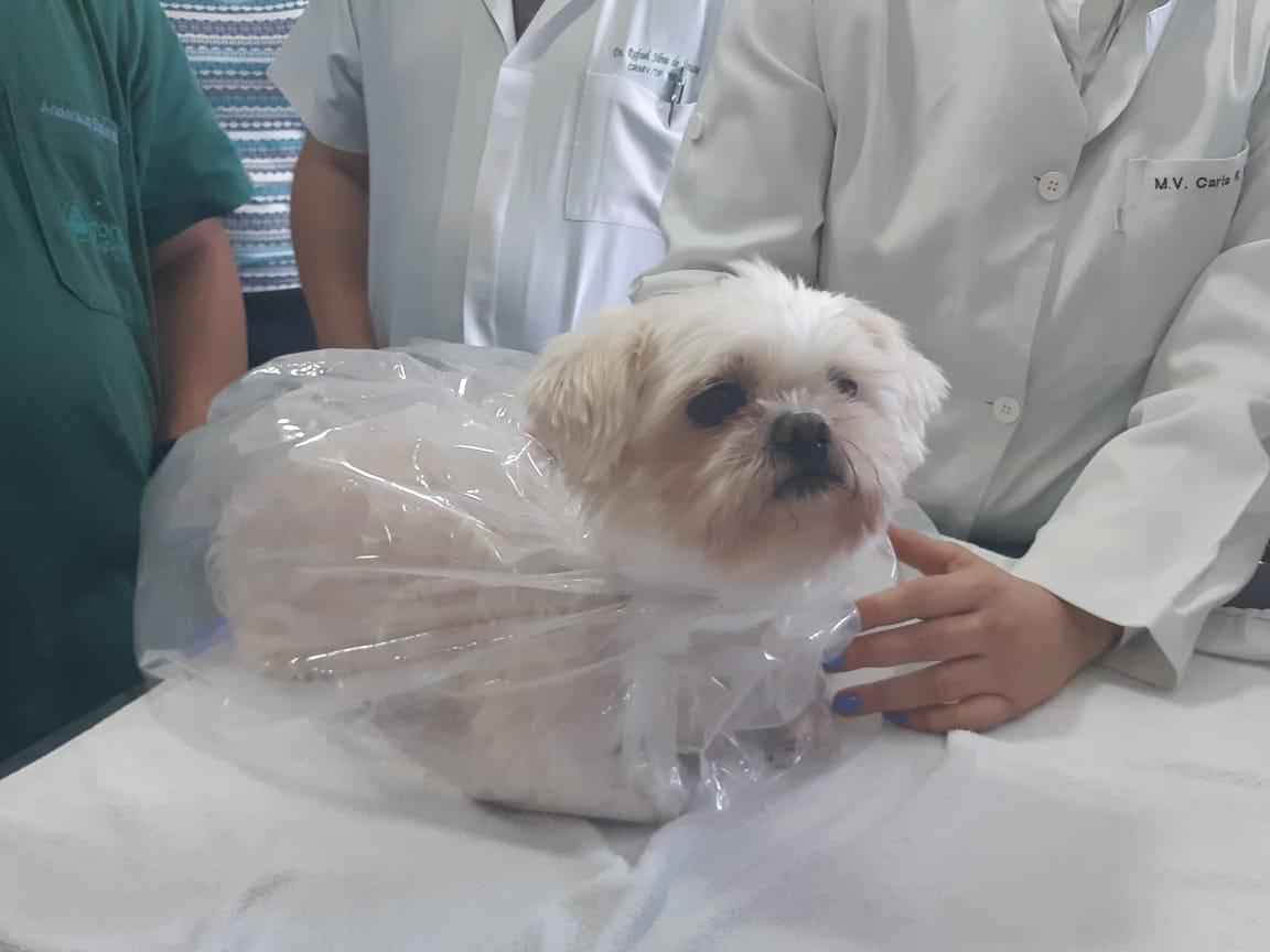 Ozonioterapia em Cães – Terapia Eficiente