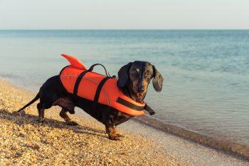 Natação para cachorros: benefícios e cuidados